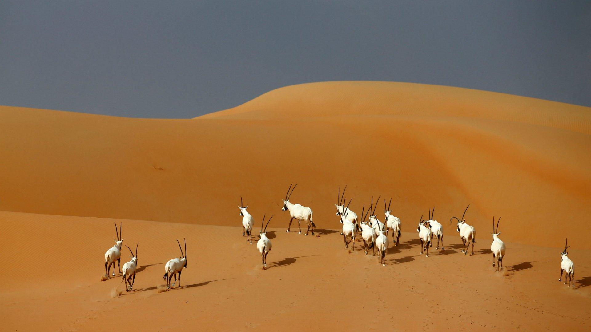 10 листопада подорожуємо до Намібії